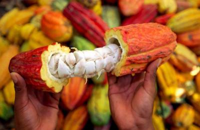1504683748-cacao.jpg