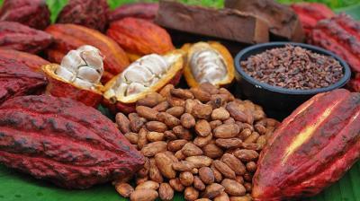 cacaosss.jpg
