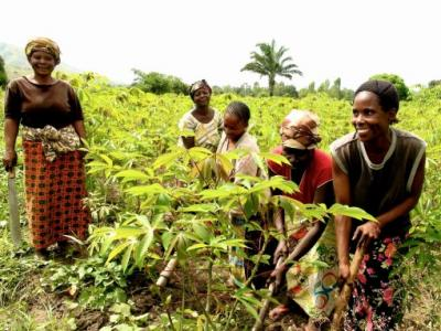 agriculture-afrique.jpg